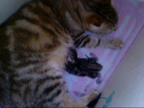 bebe chaton
