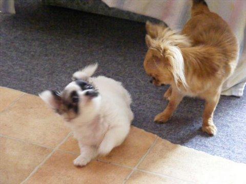 Eden et Puma / 2 terreurs mini mini/