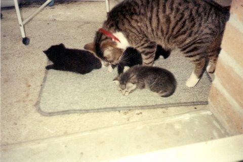 MIMINE & ses bébés / une chatte abandonnée que j'ai sauvé, mais elle a fait 3 bébés -on a trouvé des