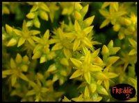 retouche fleurs