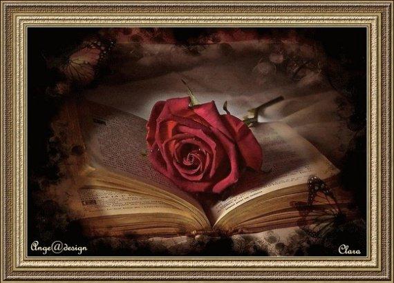 rose-rose_sur_livre-img