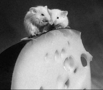 ratfromage