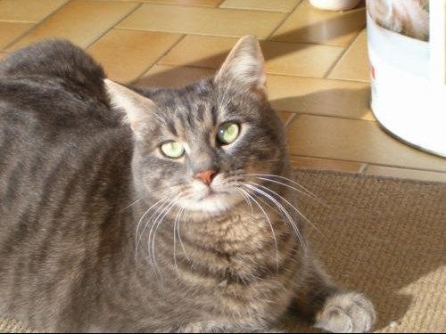Leon 12-2007 002