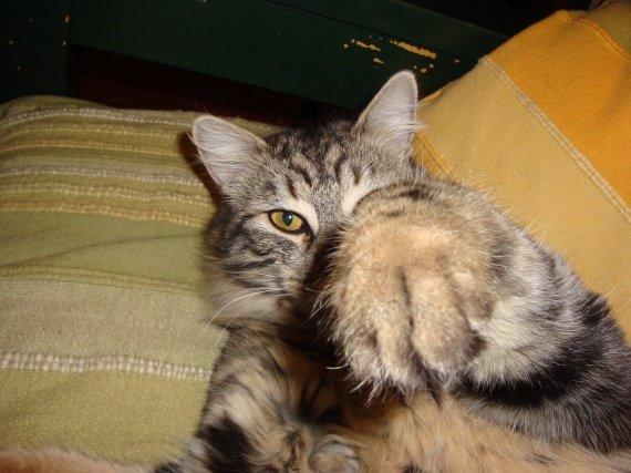 sidoux, chat de jiloclo