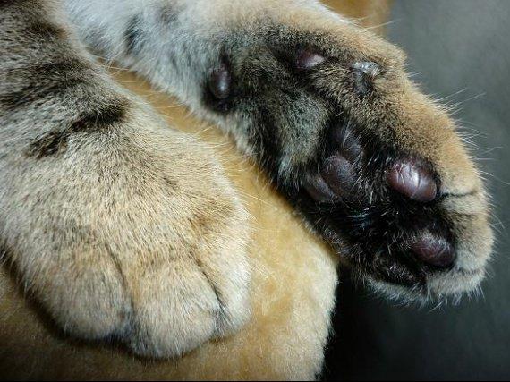 chanel, chat de margaux