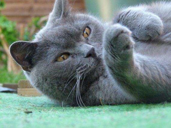 syrus, chat de anne so