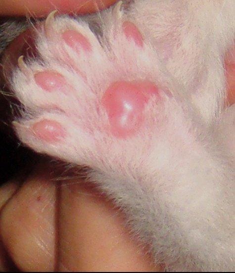 azrael chat de lula bee
