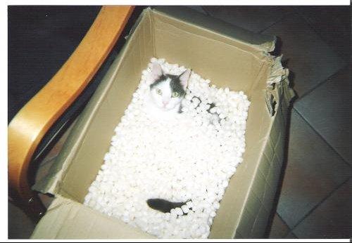 chat en colis
