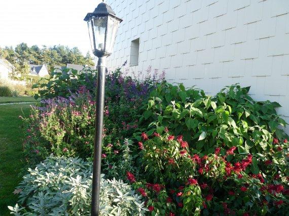 floraison du 1 novembre Sauges-2011-p1060233-img