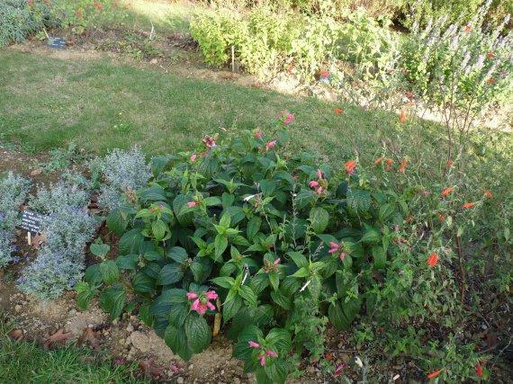 floraison du 1 novembre Sauges-2011-p1060207-img