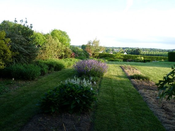 jardin de sauges & collection nationale chez Buchananii Sauges-2012-p1060587-img