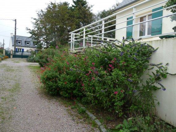 jardin de sauges & collection nationale chez Buchananii Sauges-2012-massif-terr-img