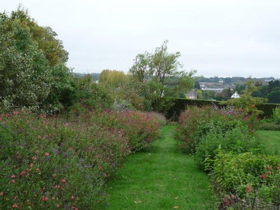 jardin de sauges & collection nationale chez Buchananii Sauges-2012-massif-abust-2012-img
