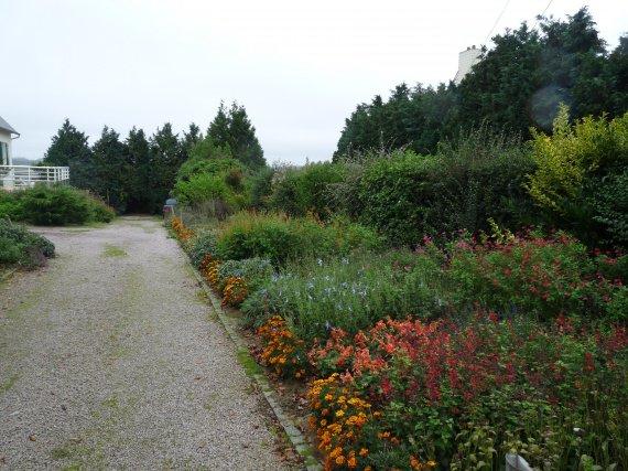 jardin de sauges & collection nationale chez Buchananii Sauges-2012-massif-entree-img