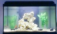 Mon aquarium (qui va bientot changer:p)