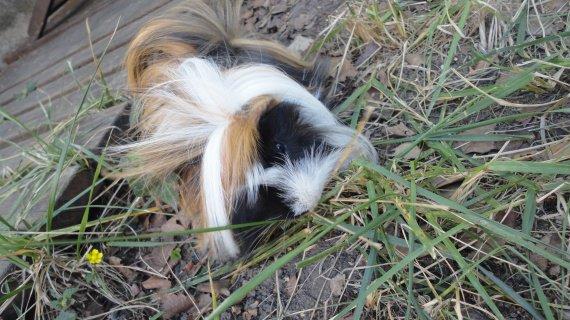 toujours dans l'herbe