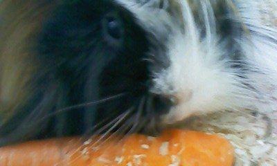 Avec sa petite carotte chérie :p