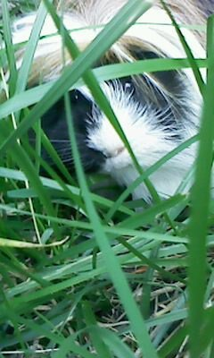 dans l'herbe :D