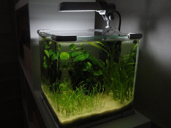 aquarium-zoka-dsc00487-img