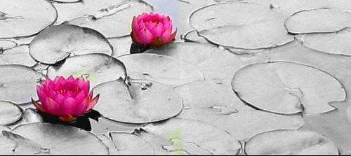 Lotuscouleursurnb