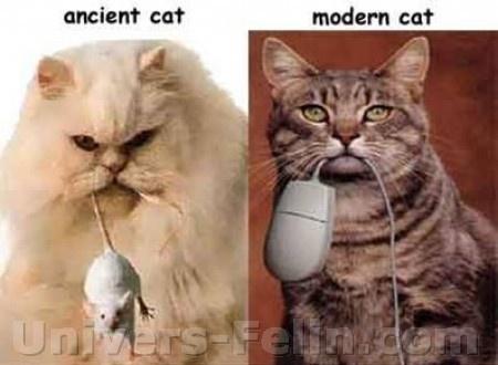 big_8377_ancient_cat_modern_cat