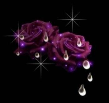 24313_743354438_rose_pleurante_H160137_L