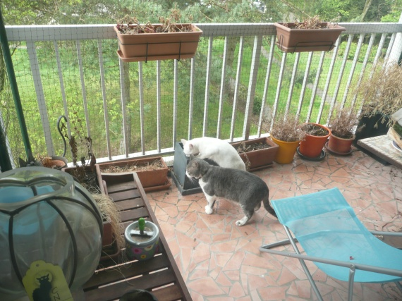 Protection balcon terrasse fen tre chats forum animaux - Protection fenetre chat ...