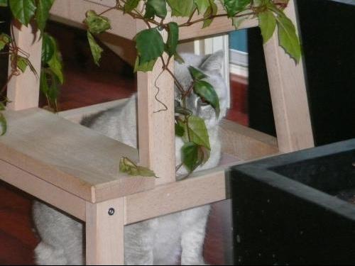 derierelesplantes