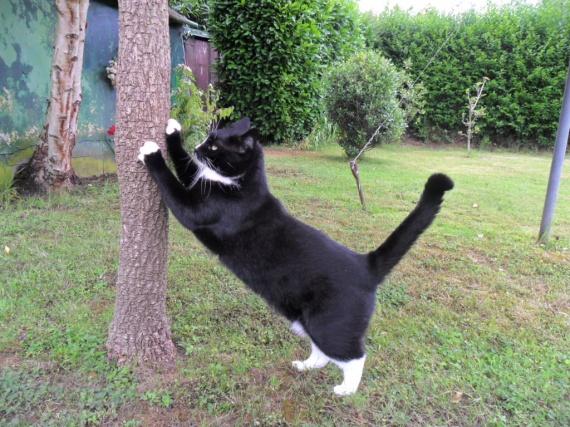 chat-recherche-souris-img
