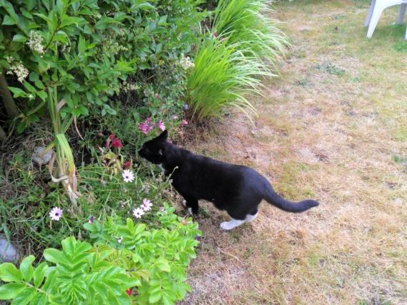 à la recherche d'une souris