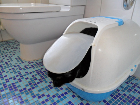 aux toilettes