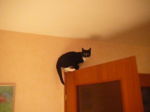 chaton sur la porte