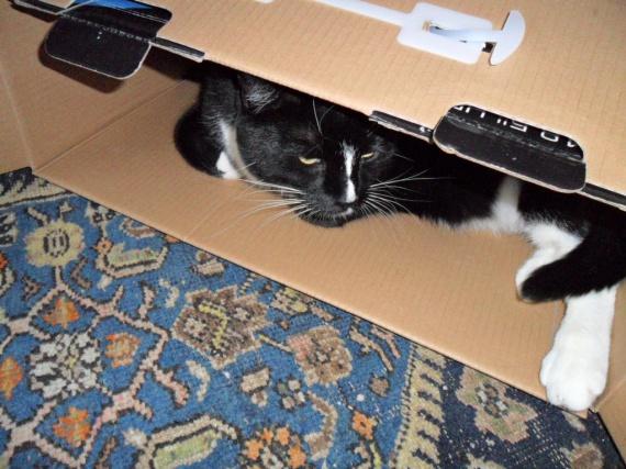 chat en boîte