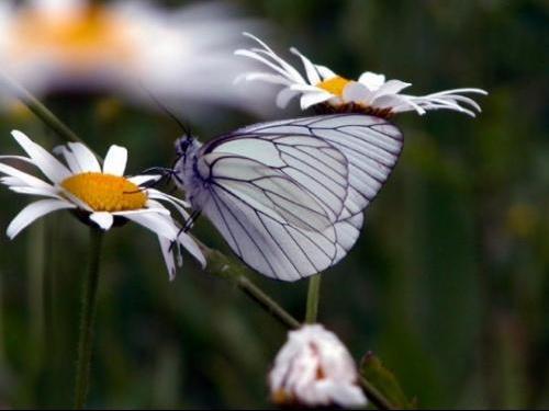 papillonfleurdelicatessecormot21340862020