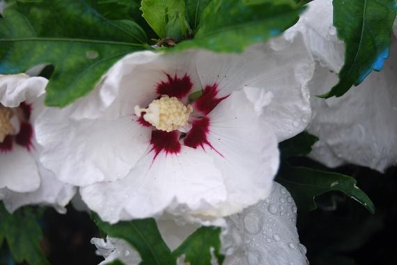 Aout 09 1075 fleurs