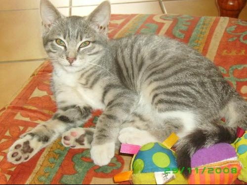 2008_11_29 Isis (2)
