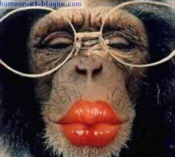 private-category-singe-bisous-img