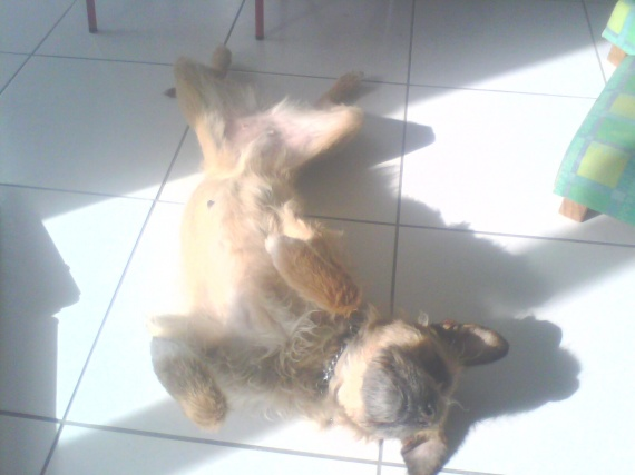 Pixie dormant
