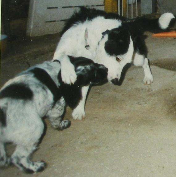 Rocky & Nouchka