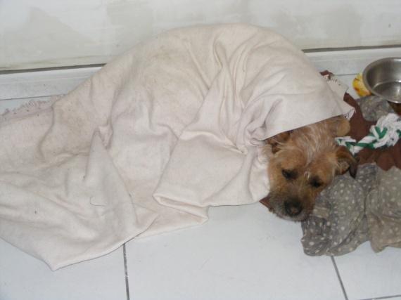 Pixie couchée