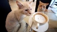 Petit café ?