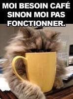 Café miaou