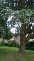 le jardin du cloître avec une partie ancienne