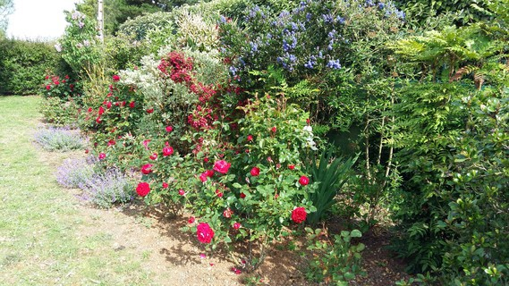 haie sauvage et bordure de rosiers actuelle le jardin de. Black Bedroom Furniture Sets. Home Design Ideas