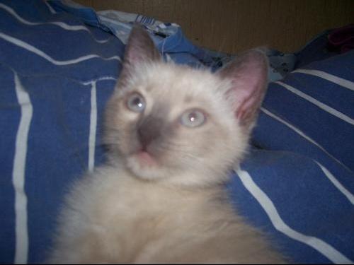 chats 7 juillet 006