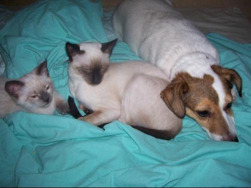 chats chien 22 juillet 009