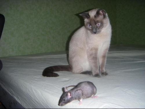 rats 27mars 2008 017