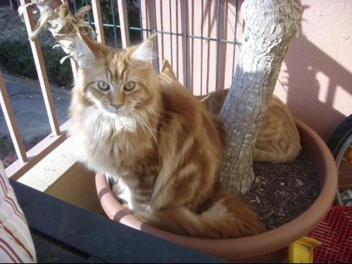 chats novembre 200813