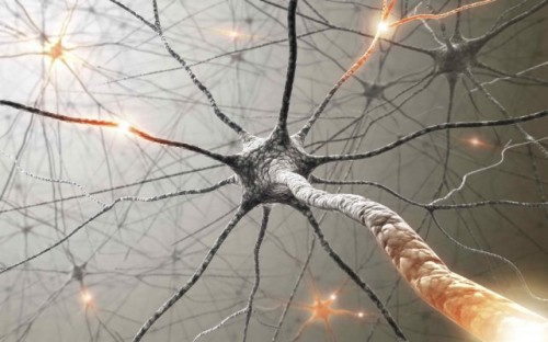 Toile neuronale