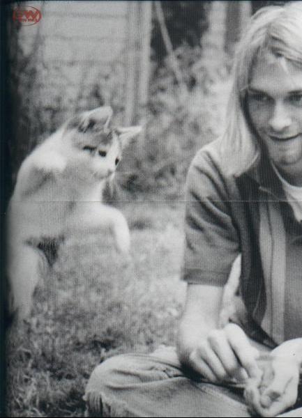 kurt_cobain_cat